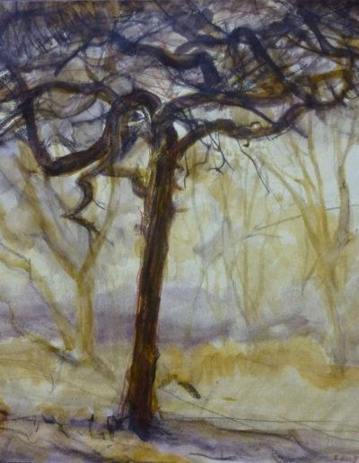 Walter van Dieren   Oude boom in de Kennemerduinen (bruin- en okertonen)